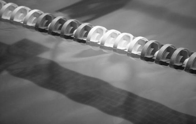 Swimming South Africa Officials Investigated For Handling of Abuse Complaint